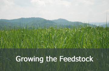 Growing the Feedstock