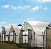 A photo of greenhouses