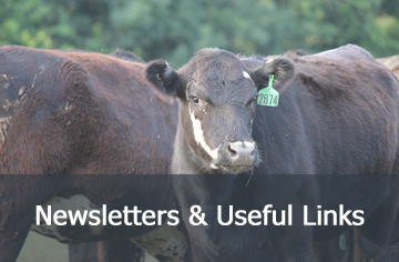 Newsletters & Useful Links