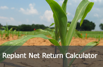 Click here to learn more about the Replant Net Return Calculator.