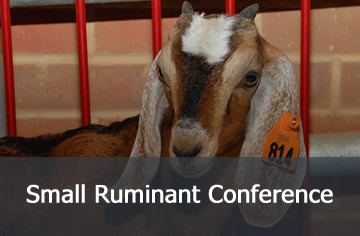 Small Ruminant Conference