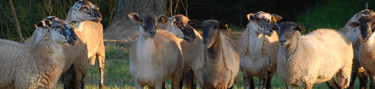 Tennessee-Alabama Small Ruminant Conference